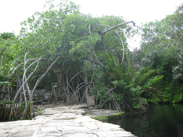Path Beside Cenote Crystalline, Playa del Carmen