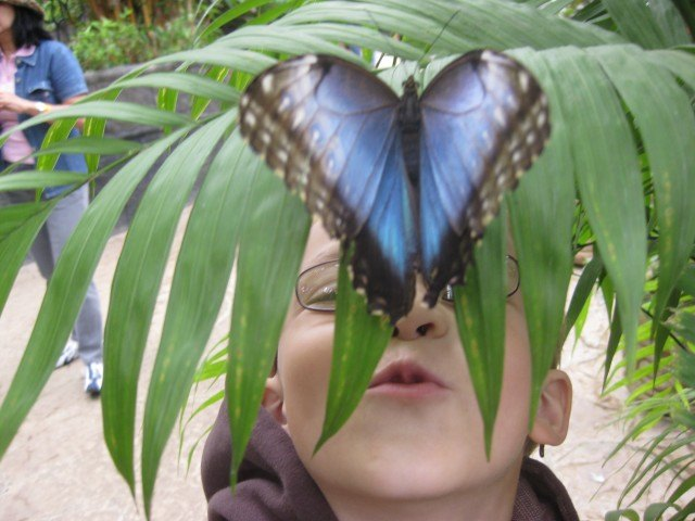 Butterfly Kisses at La Paz Waterfall Gardens Costa Rica