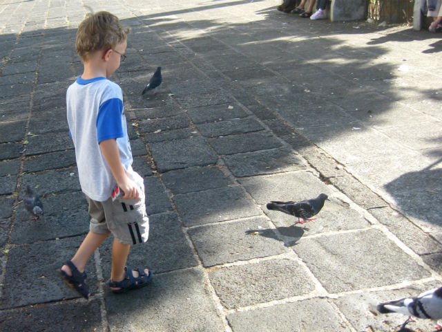 Chasing Pigeons in Parque Central Heridia Costa Rica