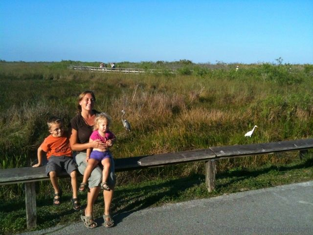 Sitting on a Fence in the Everglades Florida The Barefoot Nomad