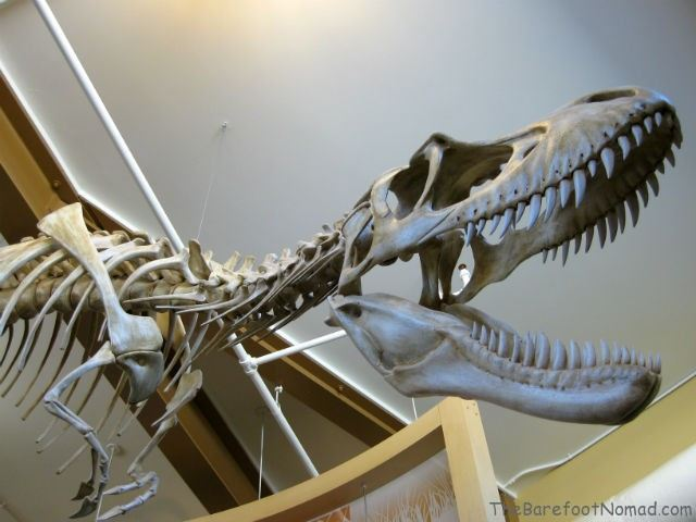 Dinosaur Skeleton Visitors Center Dinosaur Provincial Park