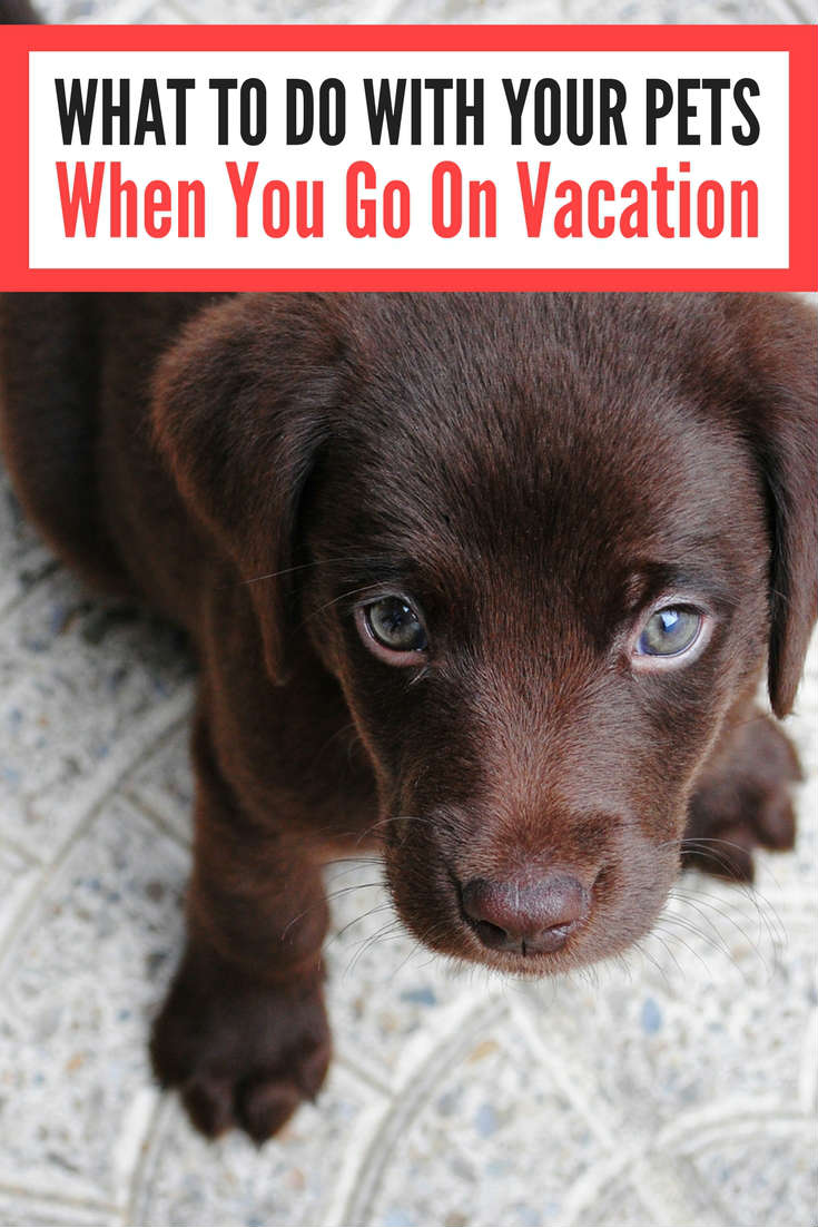 What To Do With Your Pets When You Go On Vacation