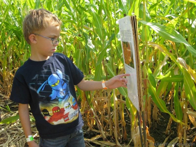 Deciphering a clue corn maze Tranquille Farm Fresh