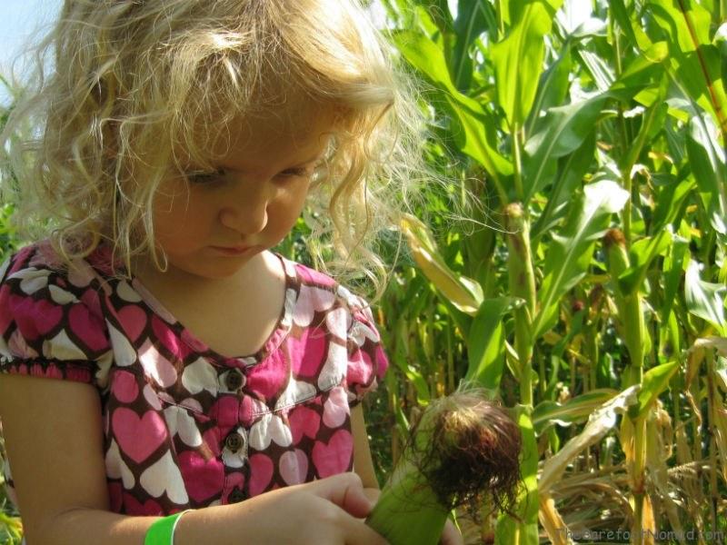 Peeling corn Tranquille Farm Fresh Corn Maze Kamloops