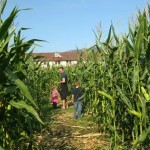 Corn Maze and Men's Dorms Tranquille Farm Fresh