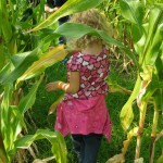 Winding through the corn maze at Tranquille Farm Fresh