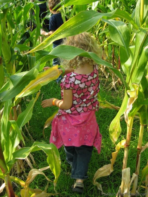 Winding through the corn maze at Tranquille Farm Fresh