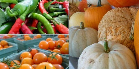 Produce at Tranquille Farm Fresh