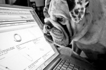 Online shopping dog Black Friday
