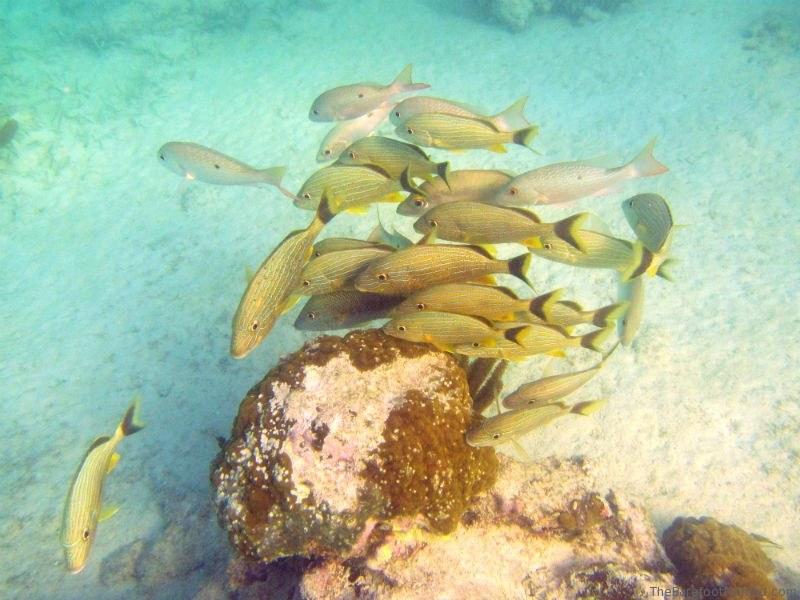 Fish at Akumal Mexico