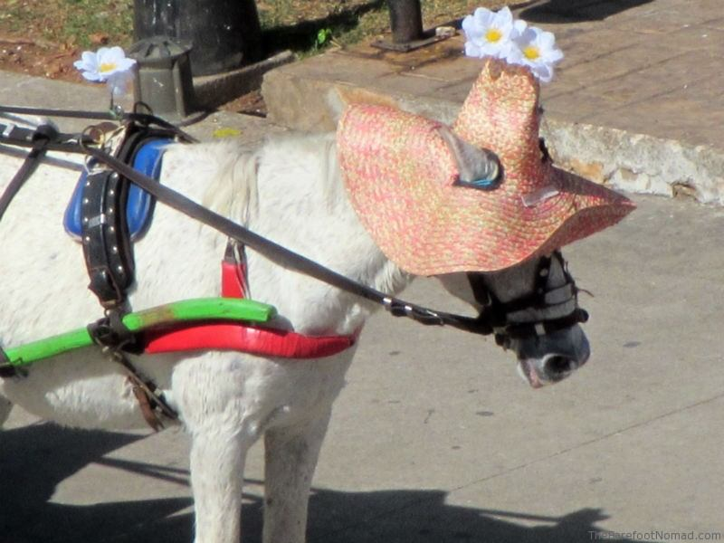 Calesa Izamel horse in a flowered hat