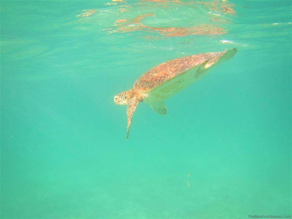 Canon D20 Powershot Sample Photo Turtle Underwater