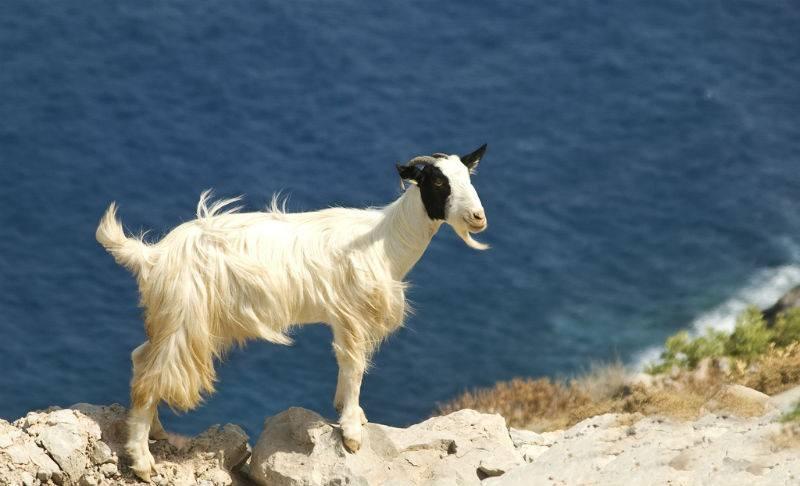 Wildlife on Crete