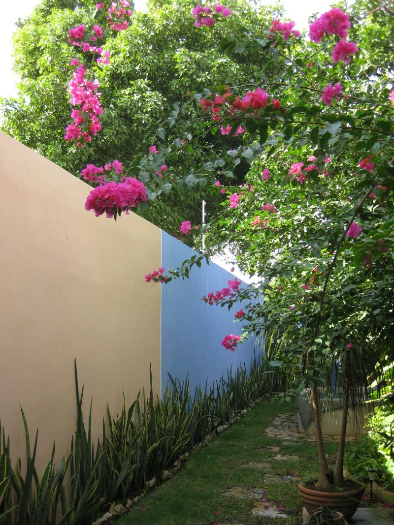 Merida back yard