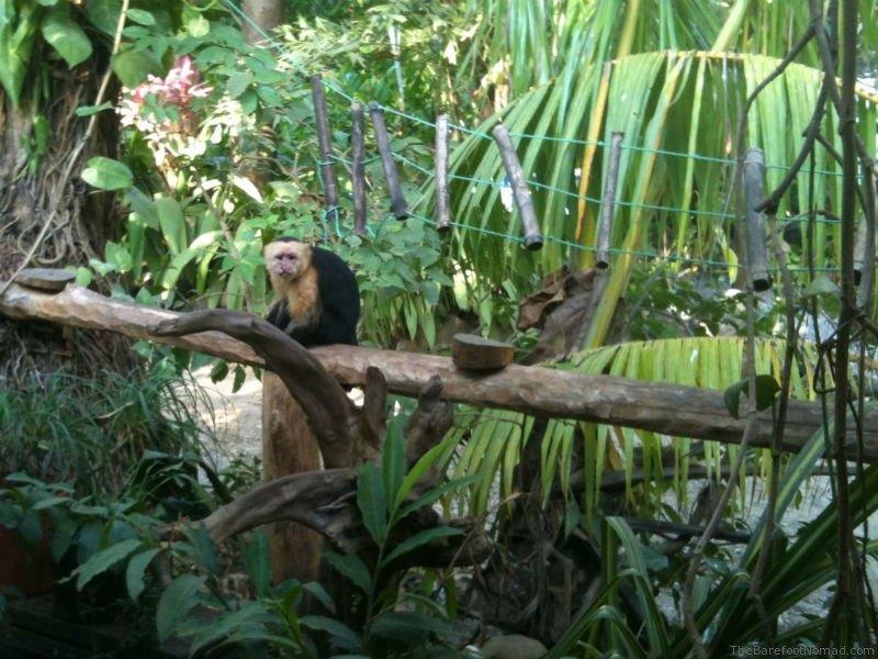 Montezuma Monkey at Cafe