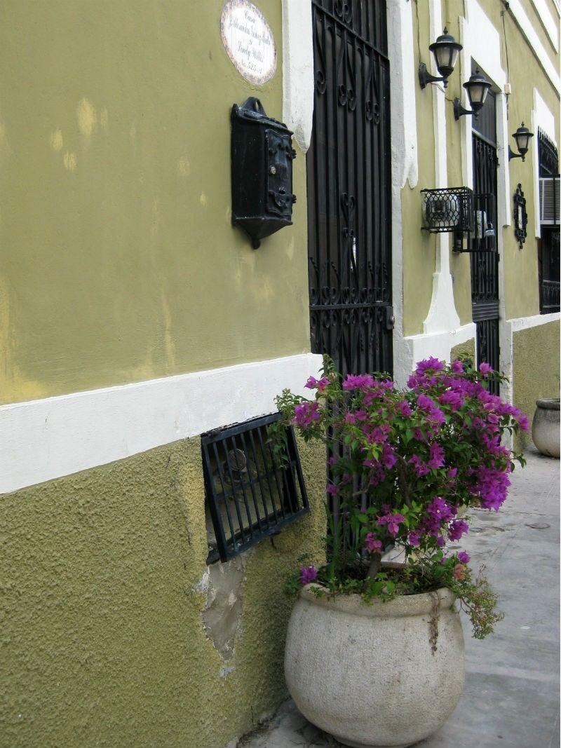 Planter Green Walls Merida