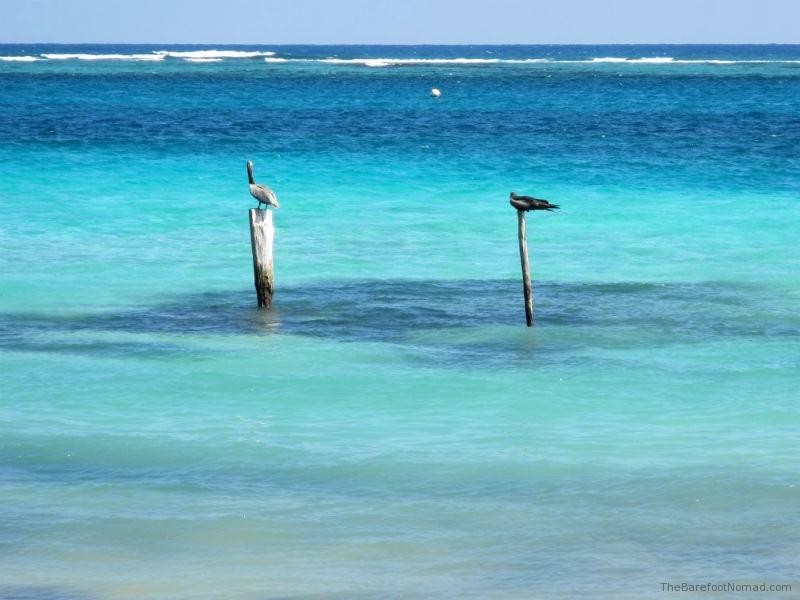 Sea Birds at Puerto Morales