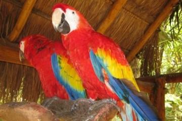 Xcaret Scaret Macaws