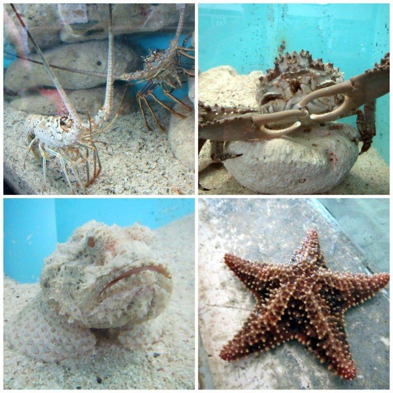 Aquarium at the Turtle Farm