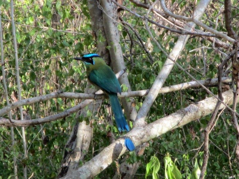 Bird Dzibilchaltun
