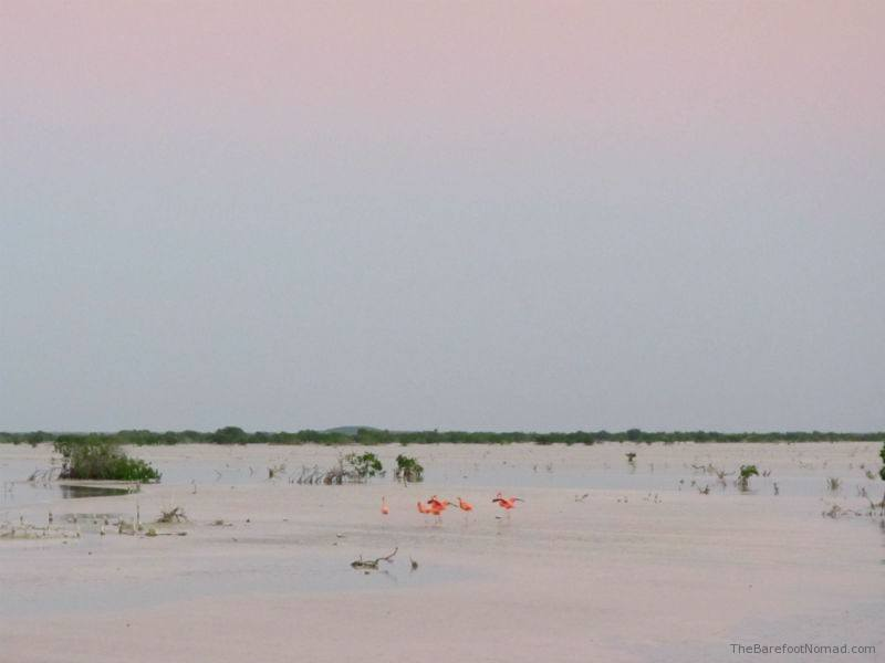 Flamingos at Laguna Rosada in Mexico