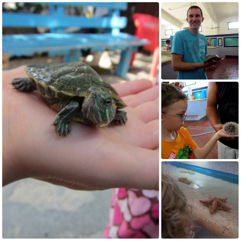 Hands on at the Isla Mujeres Turtle Farm