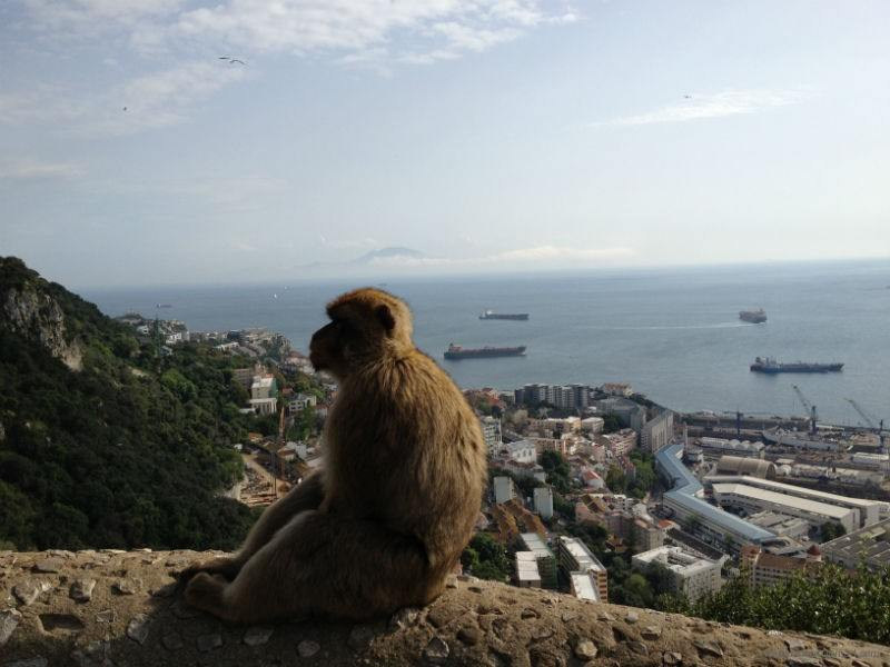 Macaque Checking Out The Views in Gibraltar