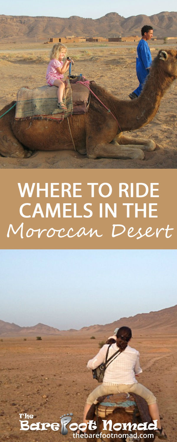 Where to ride camels in the Moroccan Desert
