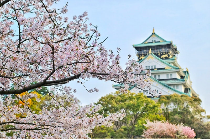 cherry blossoms in front of Osaka Castle Park Japan