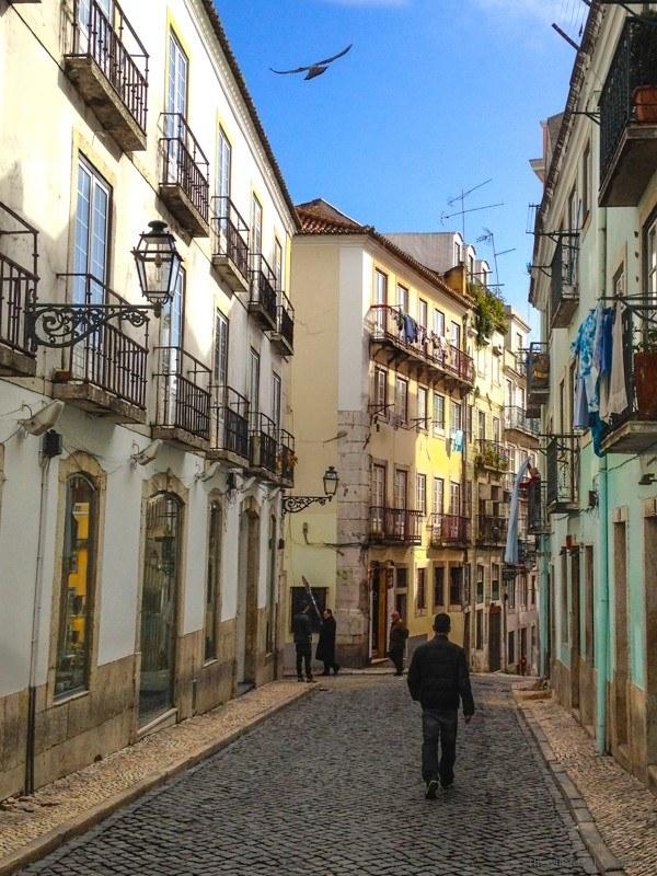 Bird Soaring above the cobblestone streets of Lisbon