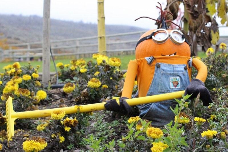 Minion in the pumpkin patch