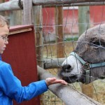 Boy feeding a little donkey at the petting zoo Canon EOS Rebel SL1
