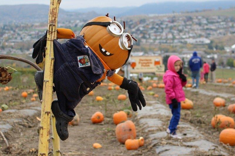Minion just hanging around at the pumpkin patchCanon EOS Rebel SL1