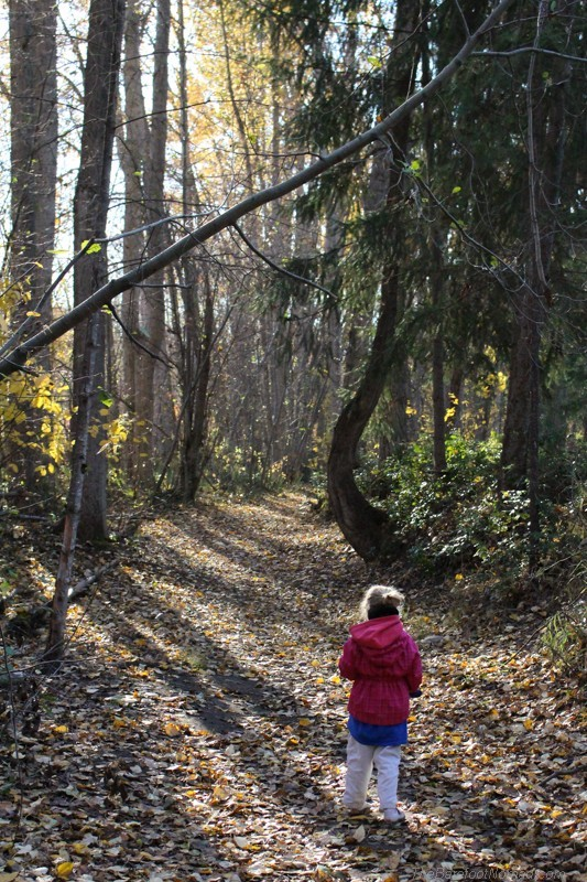 Little girl on the park path in fall