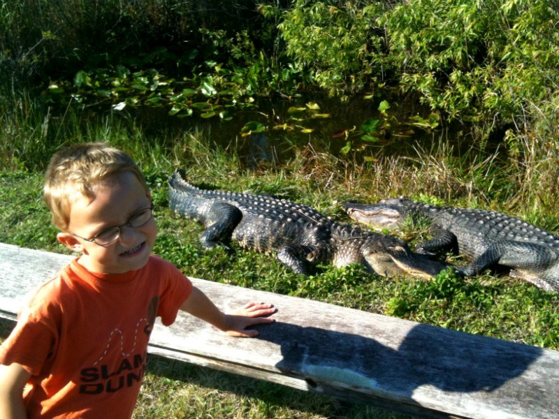Cole and the Alligators