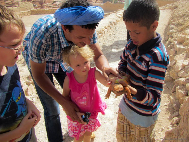 Looking at a reptile in Morocco