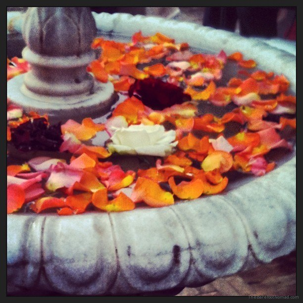 Flowers in the fountain at our riad Morocco Marrakech Marrakesh