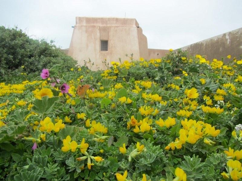 Yellow flowers near the battlements