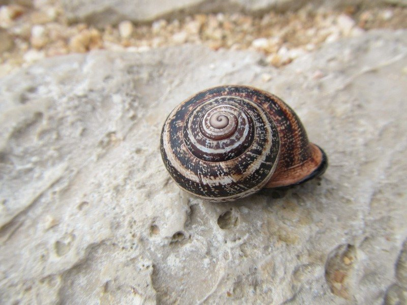 A snail on the path at Sagres Point