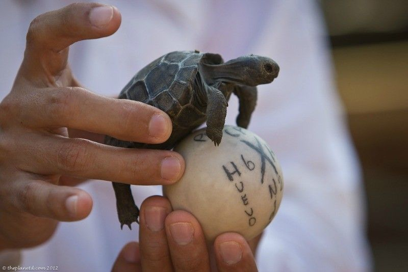 Baby turtleBaby turtle Photo courtesy of theplanetD