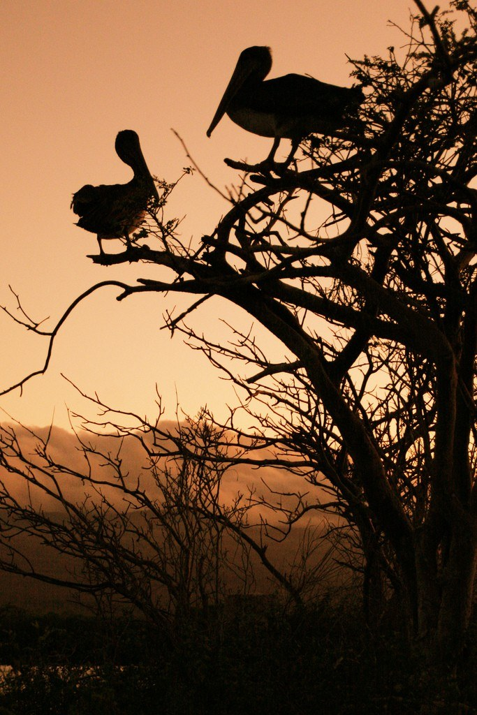 Galapagos Islands by Michael R Perry on Flickr