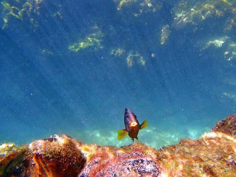 Underwater at Concha del la Perla Photo courtesy of Adam Off The Radar