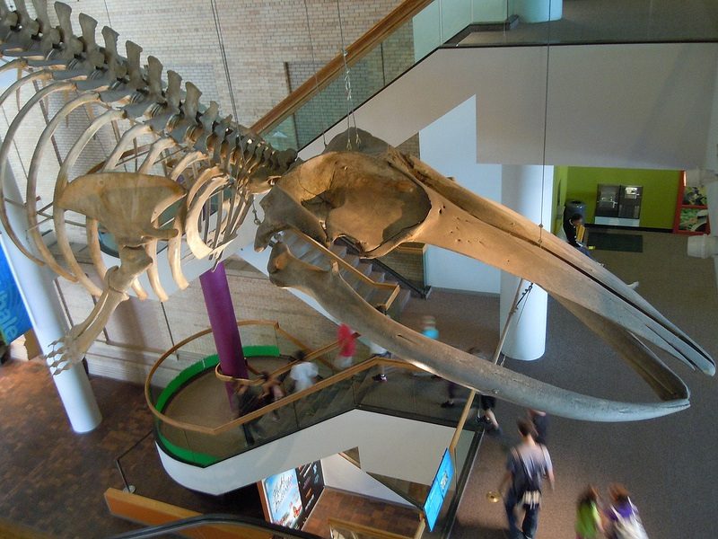 Denver Museum of Nature and Science by mrwynd on Flickr