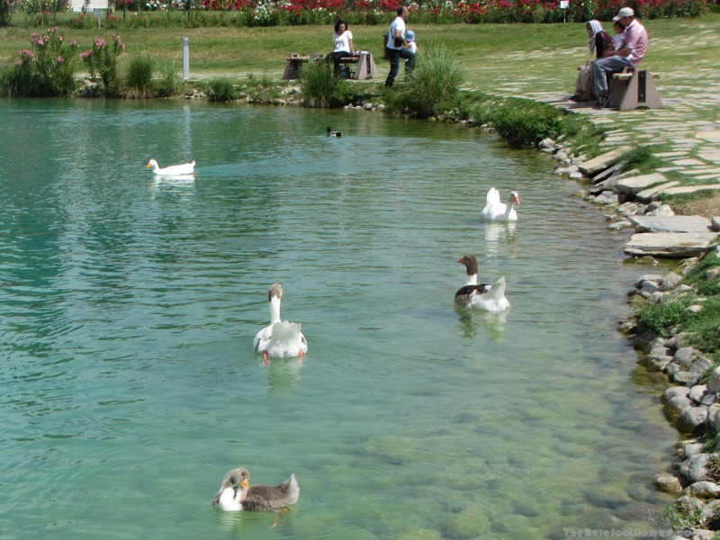 Ducks in the lake at Pamukkale Natural Park