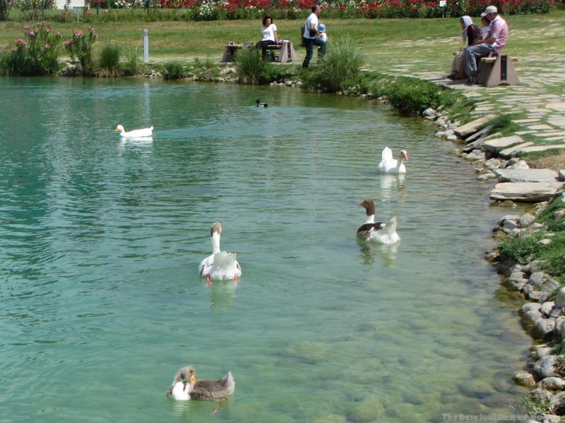 Ducks in the lake at Pamukkale Natural Park
