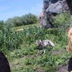 Arctic Fox Winnipeg Assiniboine Park Zoo