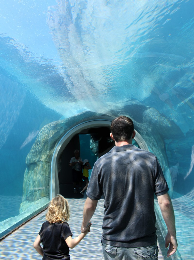 Looking for Polar Bears in the Tunnel with Daddy at the Winnipeg Assiniboine Park Zoo