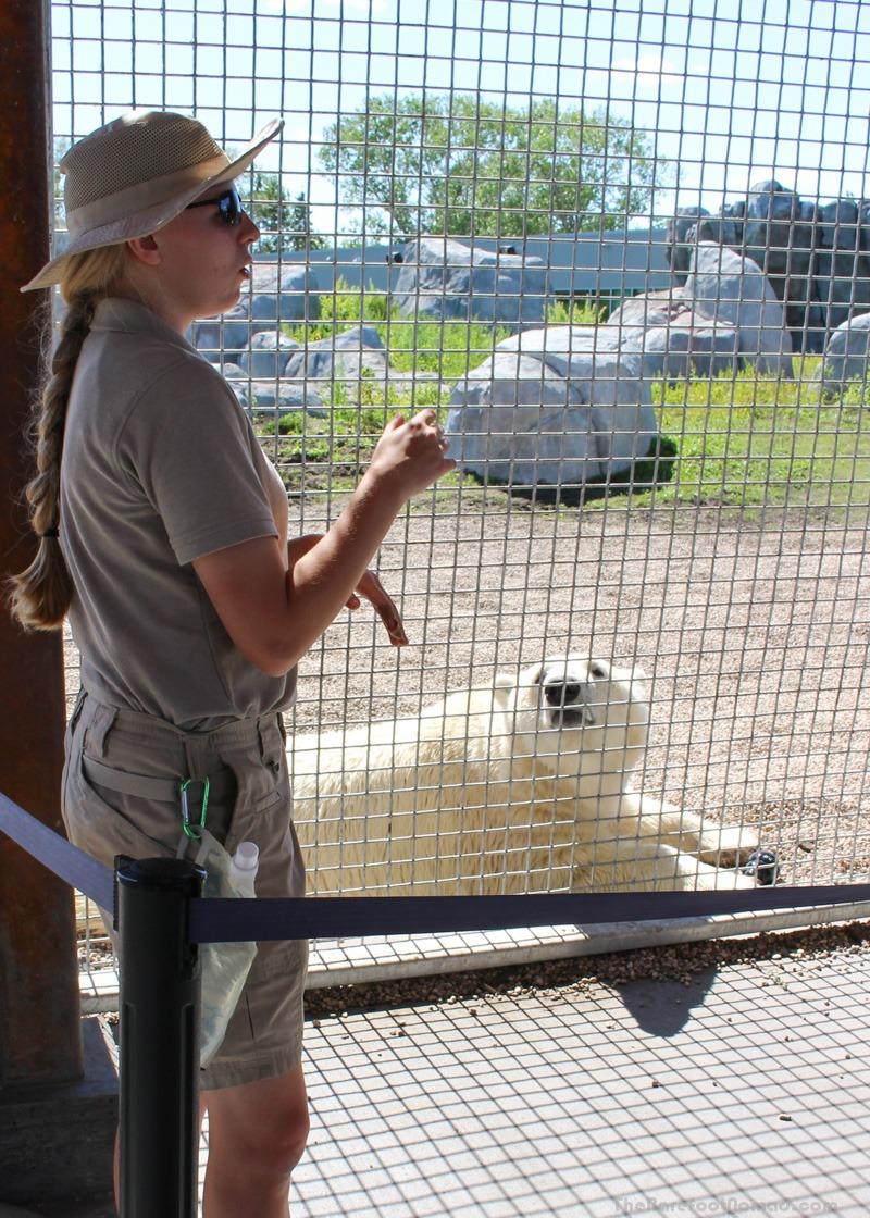 Learning a little more about Hudson the Polar Bear at the Winnipeg Assiniboine Park Zoo