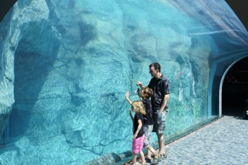 Checking out the Polar Bear tunnel at the Winnipeg Assiniboine Park Zoo