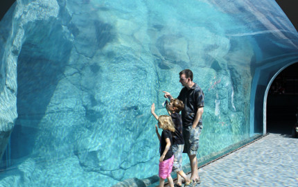 Checking out the Polar Bear tunnel at the Winnipeg Assiniboine Park Zoo
